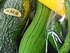 石垣島産野菜