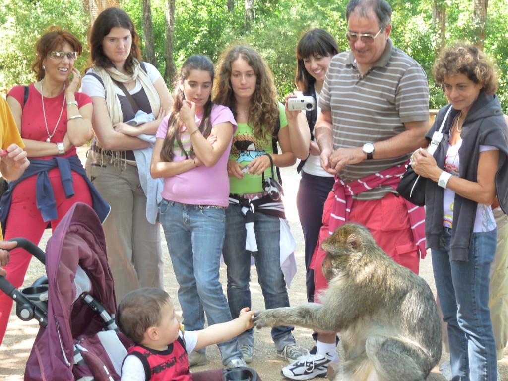 Visite à la forêt des singes