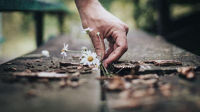 Fleurs obsèques, compositions florales enterrements