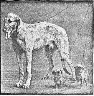 dog-show 1930