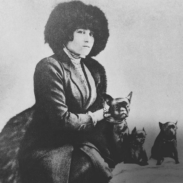 New picture of Colette with two Petite Brabancons & French Bulldog