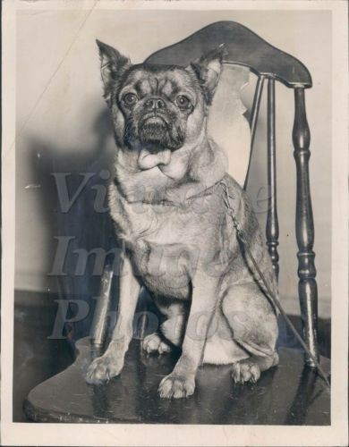 1950-Dion-Aroon-Dog-William-