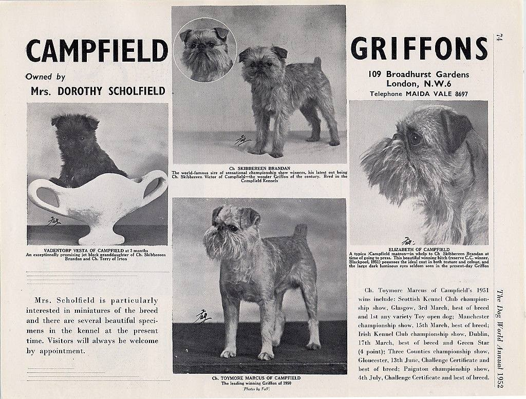 1952 and features another English kennel - the Campfield Griffons.