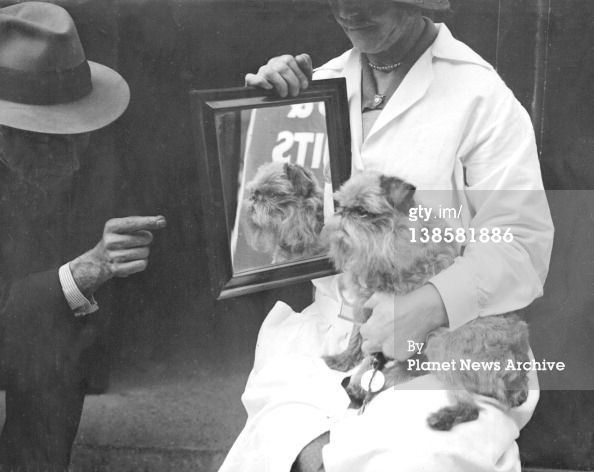 Griffon Bruxellois Dog Show at the Holy Trinity Hall, London. - 30-September-1930