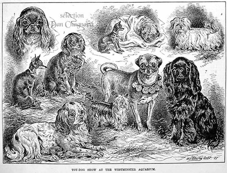 17 October 1885 and on the Westminster Dog Show