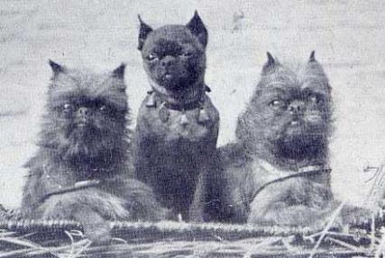 Poussette, Roméo & Fido - 1926