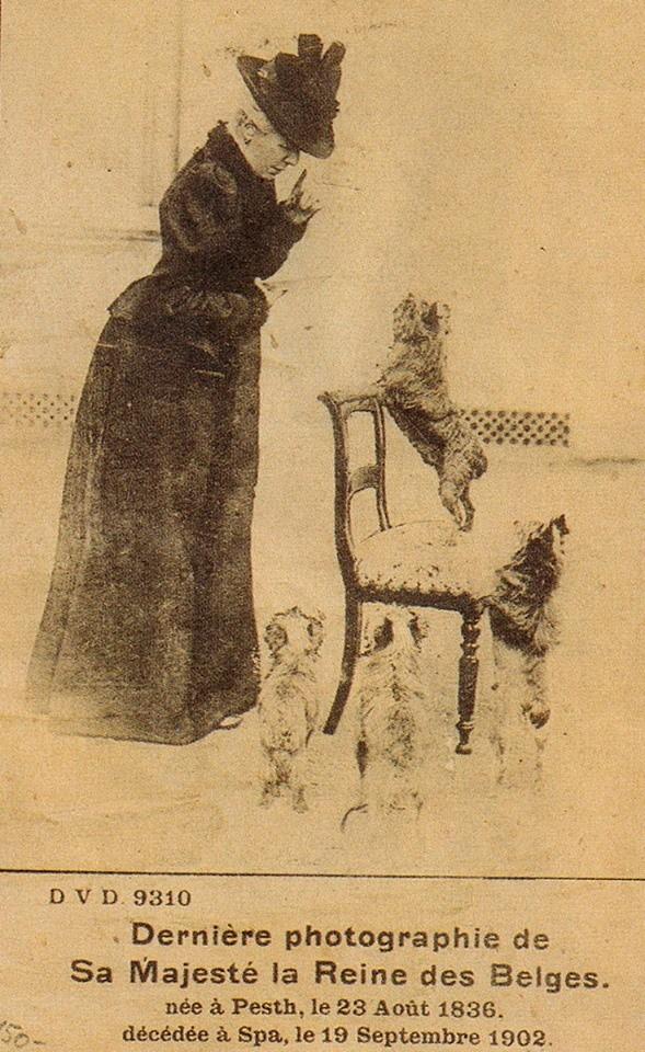 HER MAJESTY MARIE HENRIETTE QUEEN OF BELGUIM & HER GRIFFONS 1902.