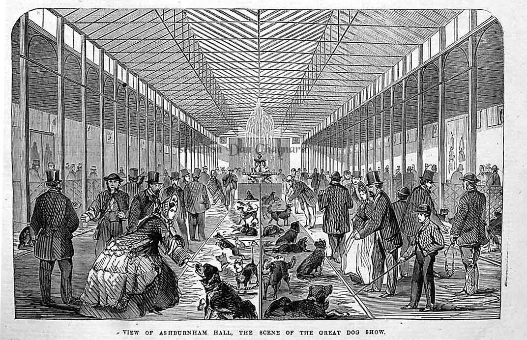 DOG SHOW Ashburnham Hall (GB) en 1863.