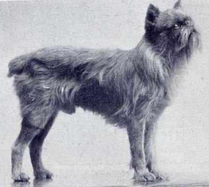 Jef - 1926
