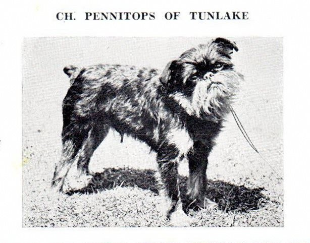 Ch Pennitops of Tunlake 1955