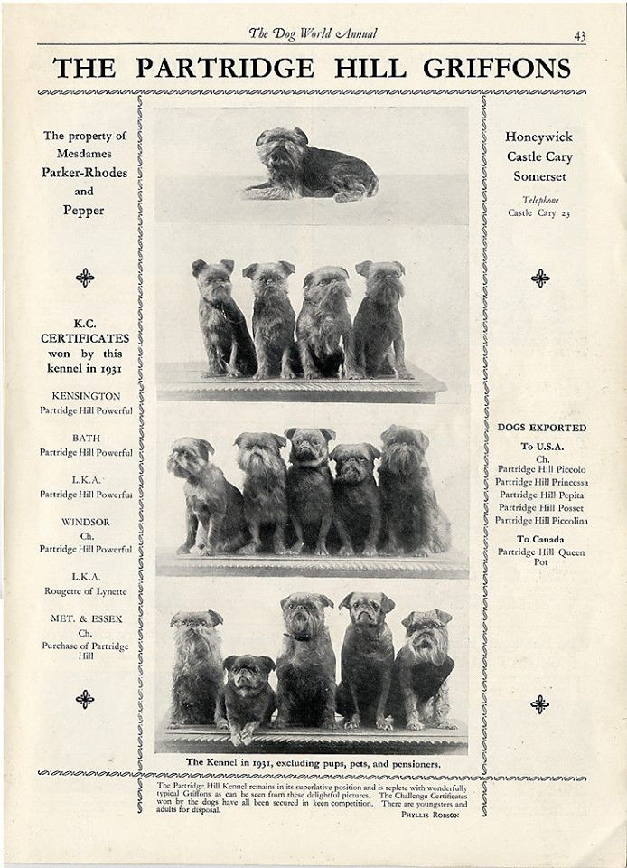 Dog World and is features thePartridge Hill Griffons