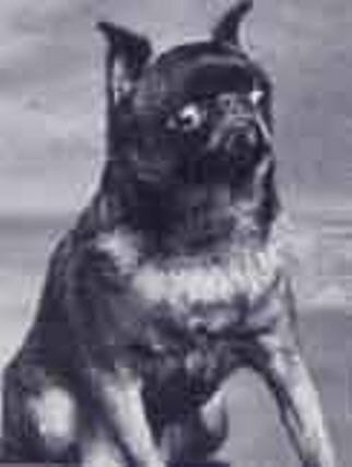 Ch. Nestor - 1937