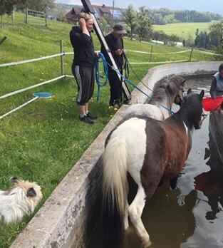 Pferdeschwimm Training