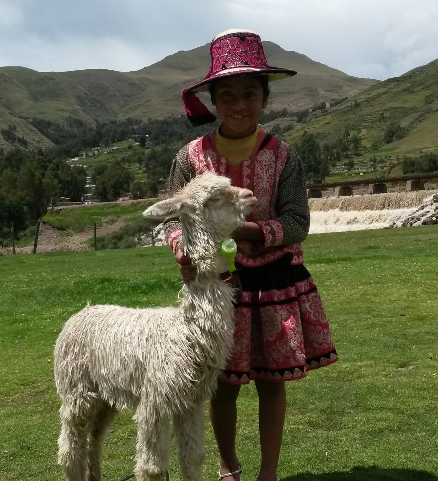 Mädchen mit ihrer spezifischen Tracht und jungem Suri Alpaka.