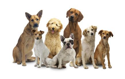 """"""" Ein Hund tut nur das, was sein Mensch nicht tut. Denn tut der Mensch nichts, übernimmt der Hund alles. Macht aber der Mensch alles, tut der Hund einfach nichts! """""""