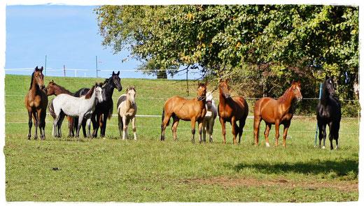 Pferdetraining Tierkommunikation Nina Folle Pferde Hunde Pferdetraining Tierverhaltenstherapie Pferdeherde Fohlenaufzucht