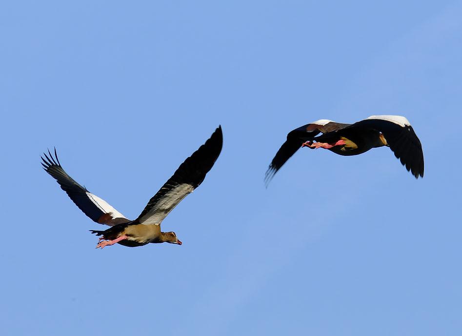 Bild: Seele - Vögel SEO (Suchmaschinenoptimierung)