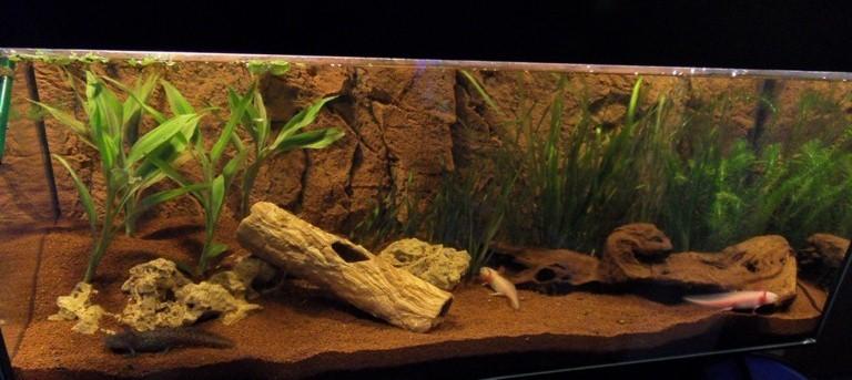 Axolotl 2010