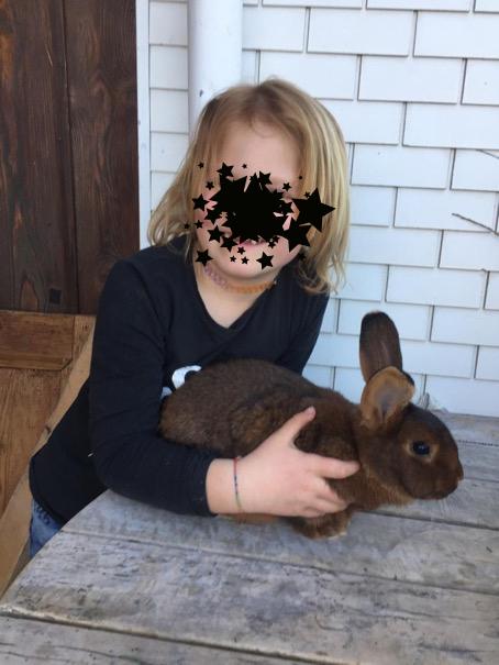 Die Rasse Deilenaar eignet sich ausgezeichnet für unsere Kleinen Chüngelizüchter