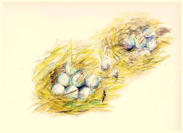 Zwei Nester!