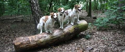3 allein im Wald