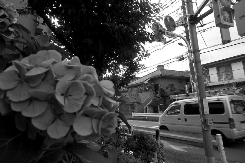 世田谷写真 #270