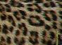 Tâche de la Panthère d'Afrique