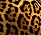 Tâche du Jaguar