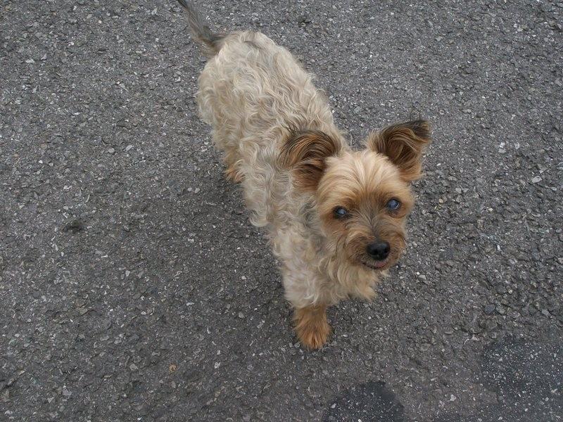 un petit chien est venu me dire bonjour !