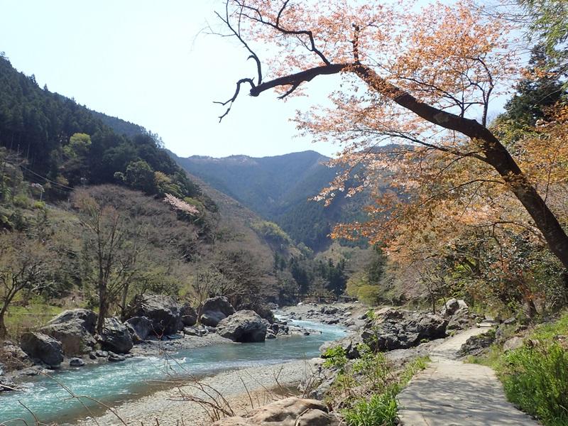 多摩川沿いの遊歩道