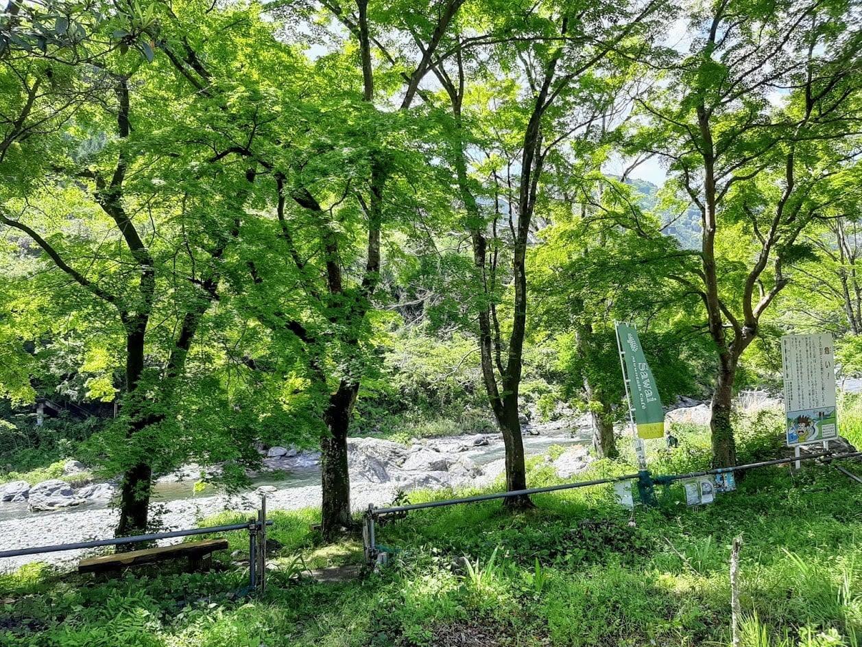 桜やモミジの木の緑が美しい