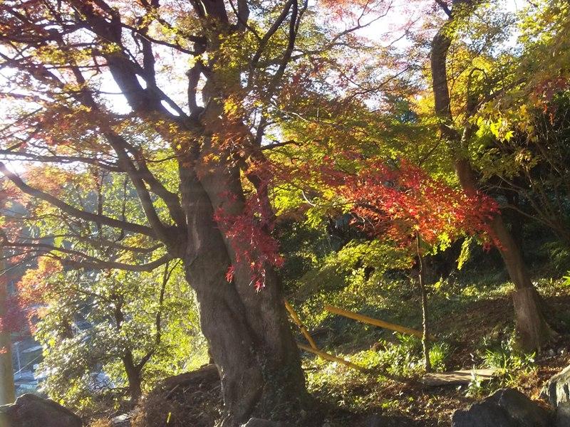 秋の紅葉はそれはそれは見事でした!