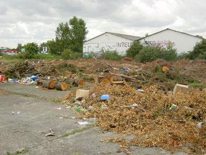 Décharge sauvage de déchets verts