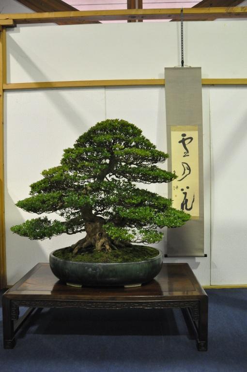 대배(大盃) 江坂泰樹