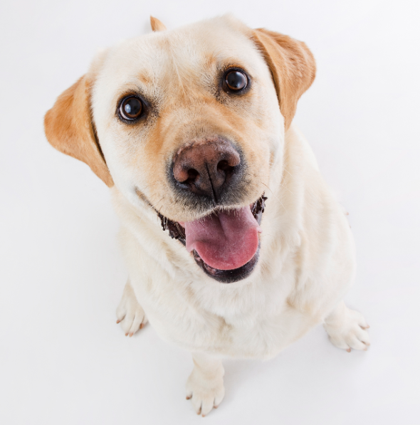 Mit einem kurzen Schweifwedeln kann ein Hund  mehr Gefühl ausdrücken, als mancher Mensch mit stundenlangem Gerede
