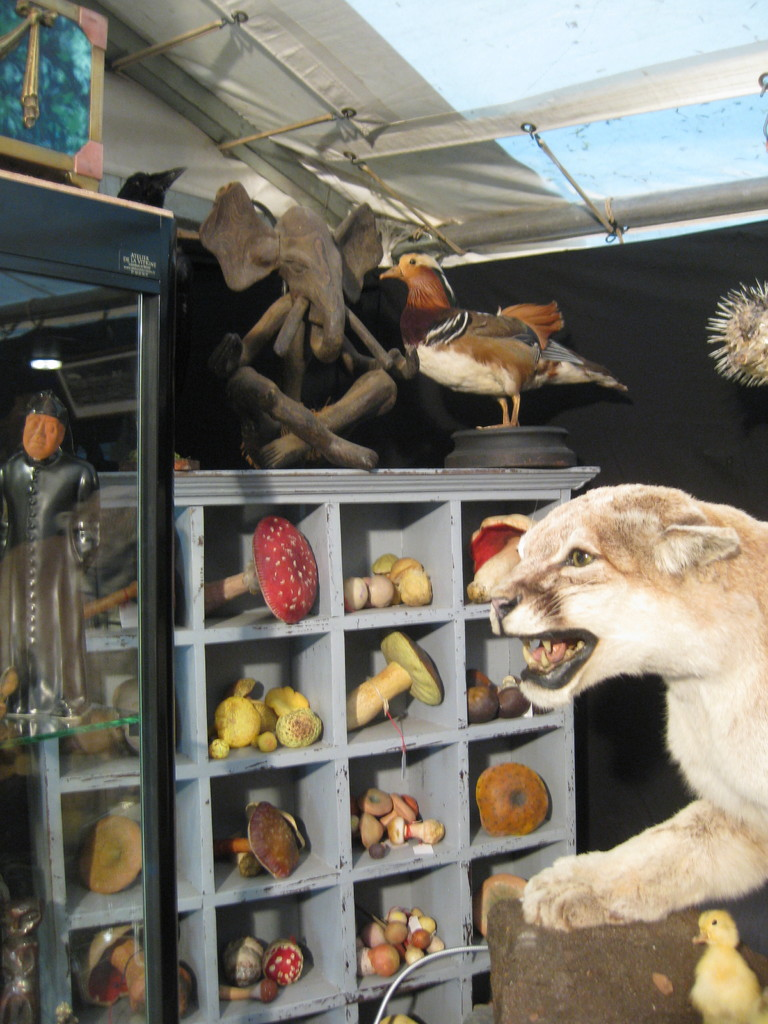taxidermie : puma du canada, grue couronnee,