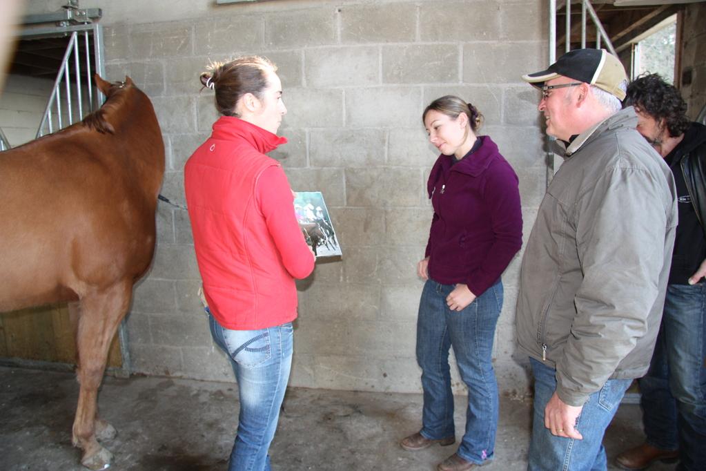 Les cavaliers studieux devant les images de chevaux toilettés made in USA!