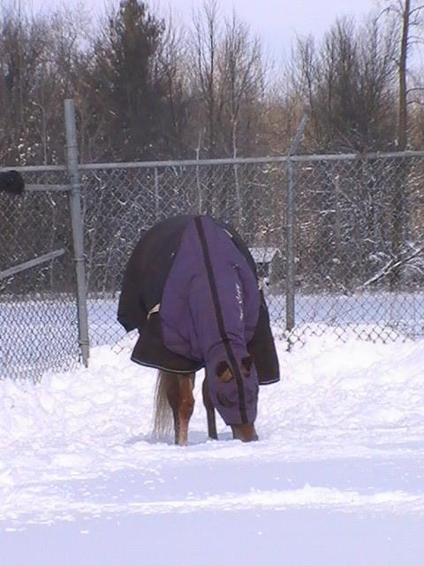 Wendy sous les couvertures et dans la neige...