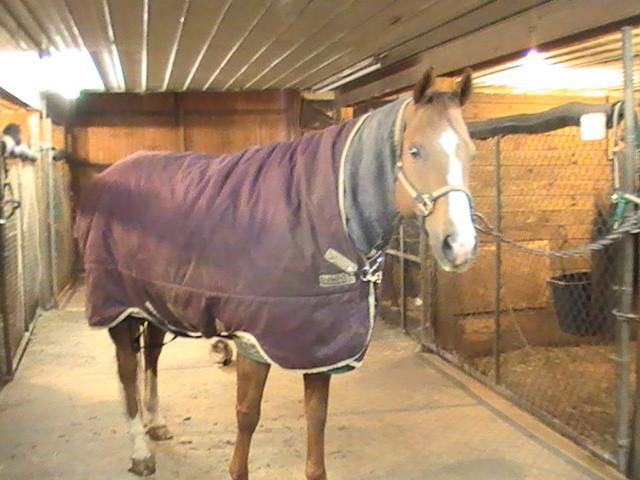 Après 2 couvertures et un couvre cou, Wyatt est prêt pour aller dehors!
