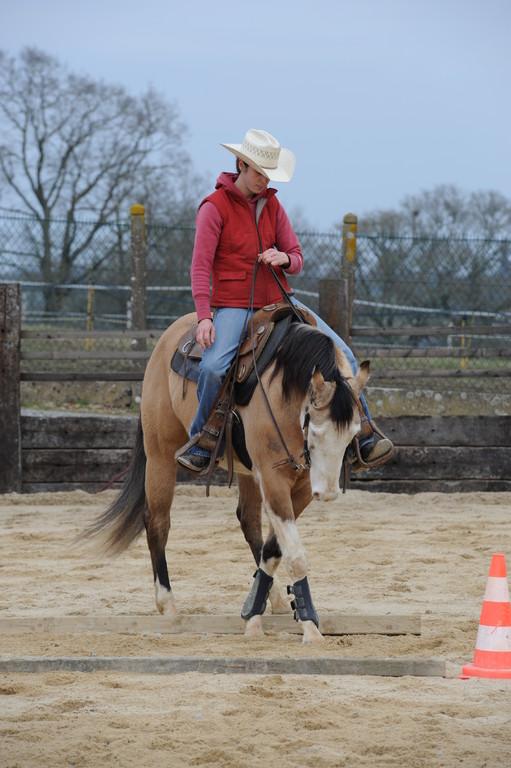 Jeune cheval à l'entraînement
