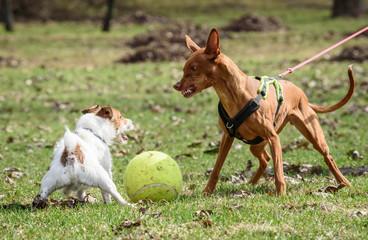 Agressie naar andere honden