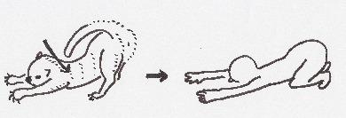 四つ這い姿勢から手を伸ばしたまま伏せます