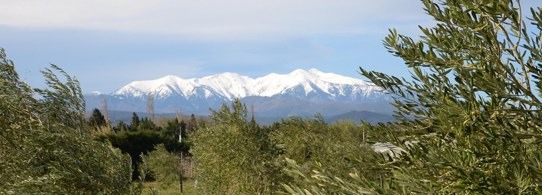 Le Canigou vu depuis la plaine du Riberal (Corneilla)