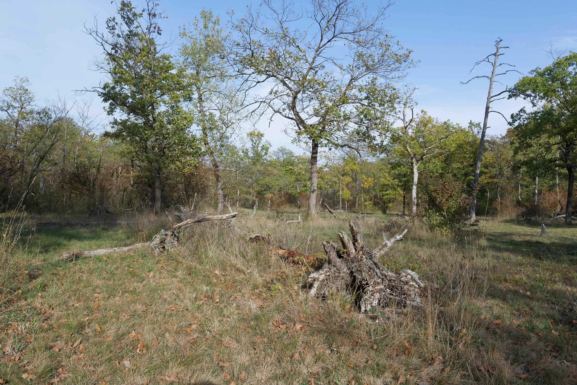 """Es gibt auch zwei """"Brennen"""", d.h. natürliche Kies- und Sandrücken der Auen mit lichtem Trockenwald, entstanden aus früheren Kiesbänken des noch unregulierten Rheinbettes."""