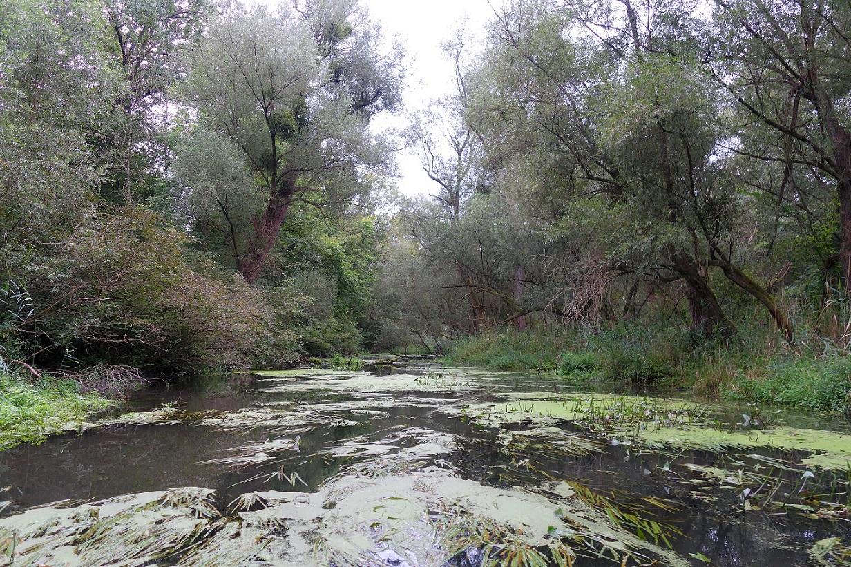 Es beherbergt diverse unterschiedliche Lebensräume und Biotoptypen wie Weichholz- und Hartholz-Auenwälder, Flussufer mit Schlammbänken