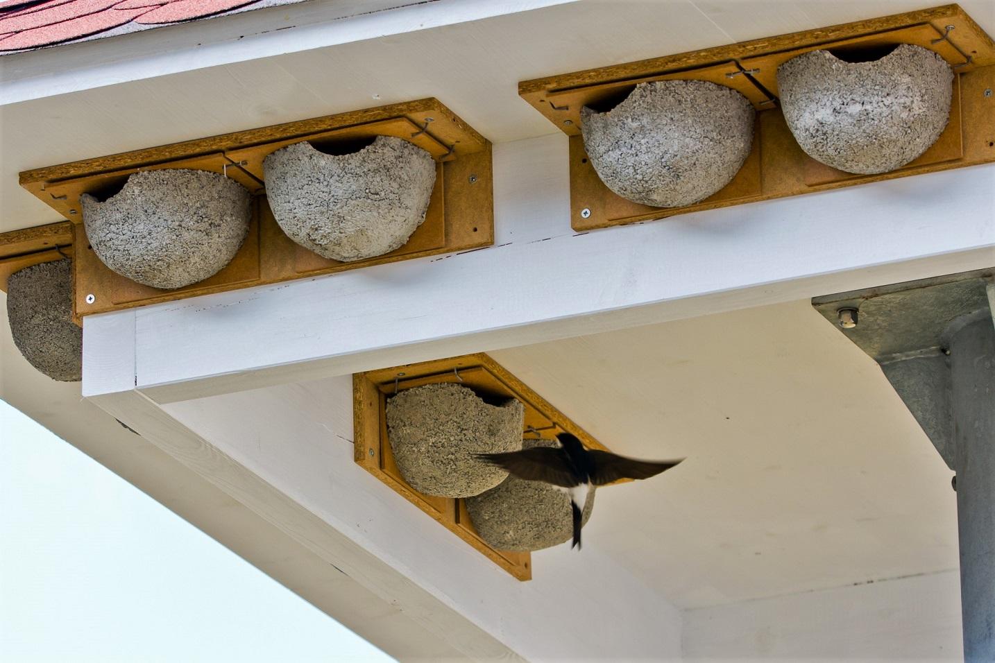 Zu unserer großen Freude wurden im Frühjahr 2019 erste Nester inspiziert und angenommen.