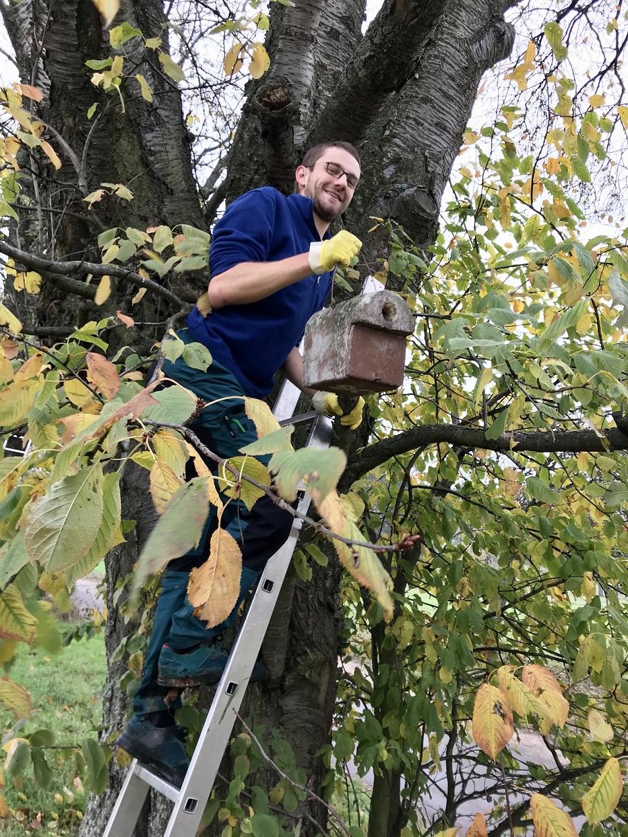 Auch Nistkästen für andere Vogelarten werden in den Streuobstbäumen angebracht und betreut.