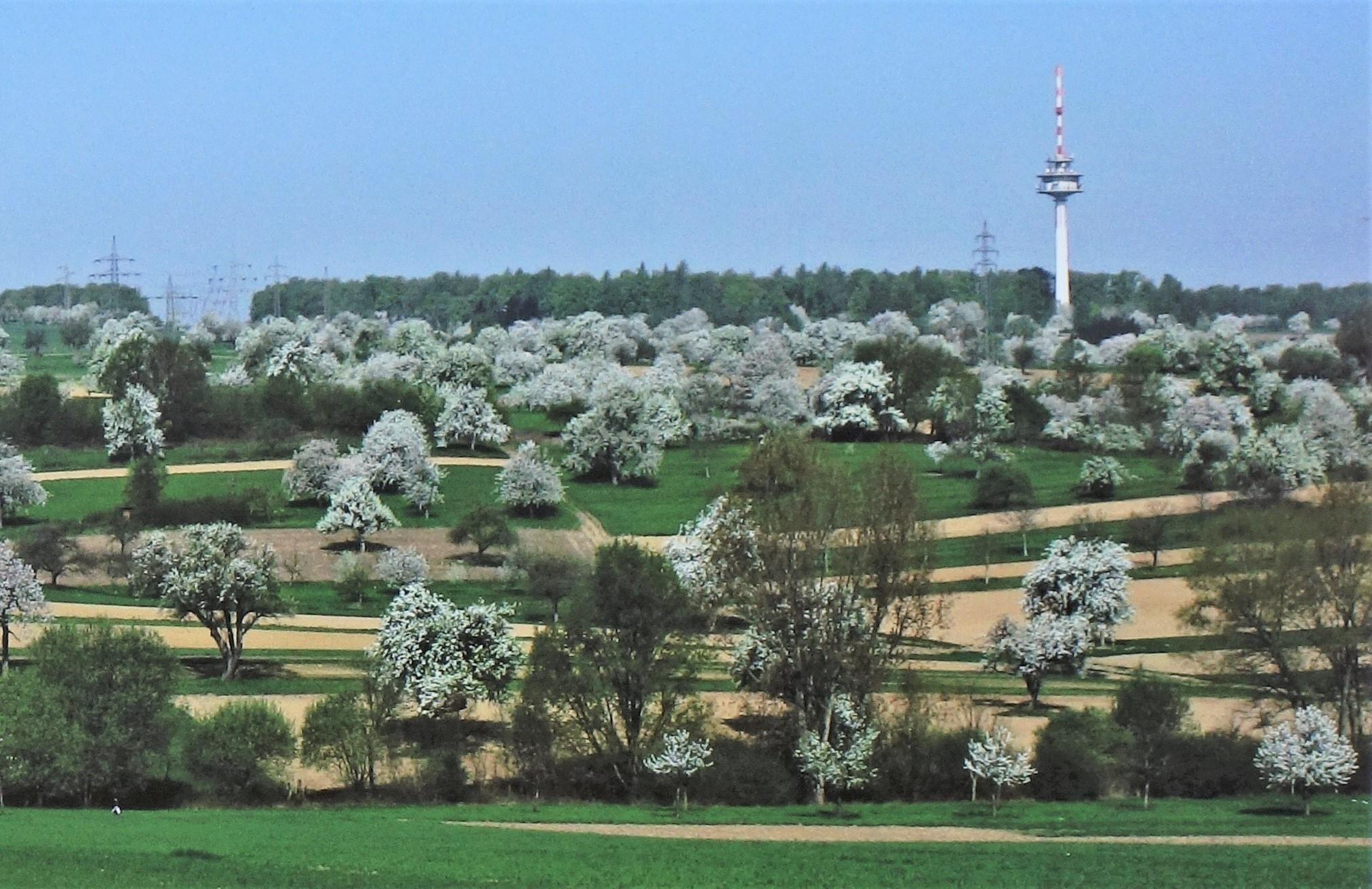 Karlsruhe besitzt einen großen Anteil an Streuobstwiesen, die einen wichtigen Lebensraum für zahlreiche Arten bieten.