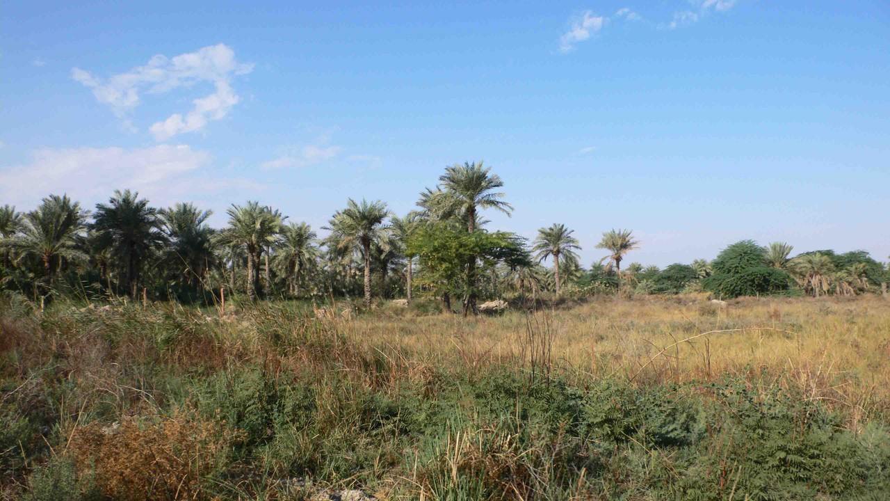 Un palmeral o una zona liberada de las aguas era un tesoro