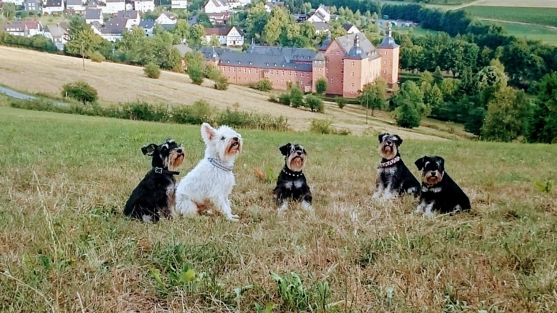 Von links: Jule, Idefix, Bakira, Debby und Hermine 💕🐾